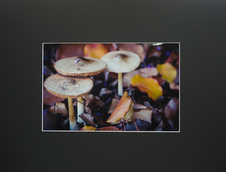Mushrooms - Lisa O'Neal Dardanup Photography Prize - HIGHLY COMMENDED DAS 2016